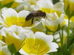 bijen klein